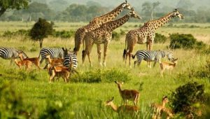 African safari animals list