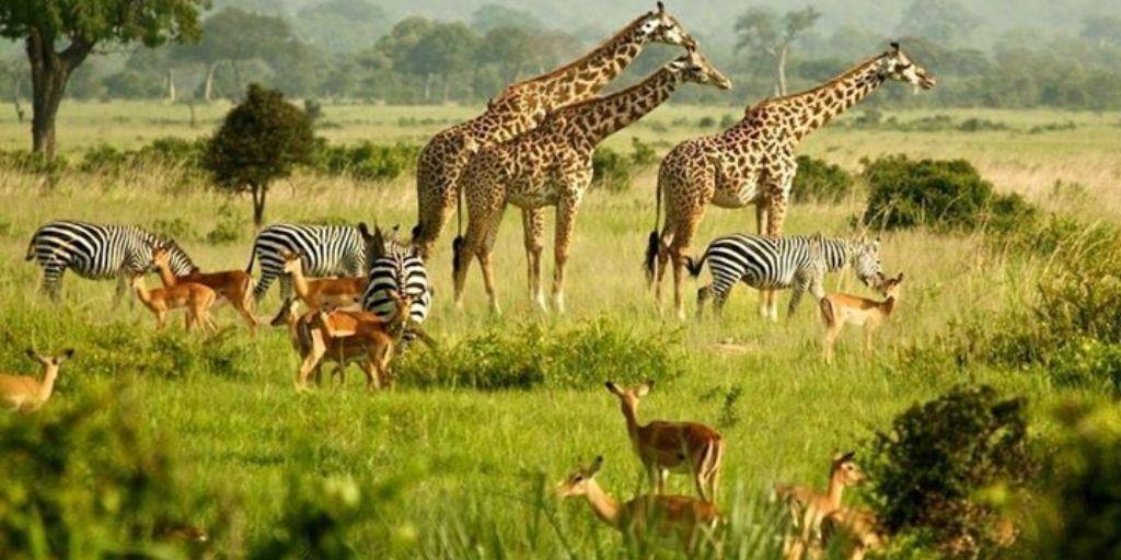 African safari animals list
